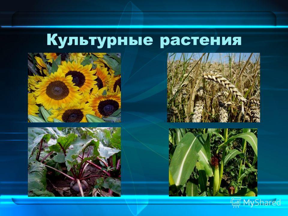 растения цветы культурные фото
