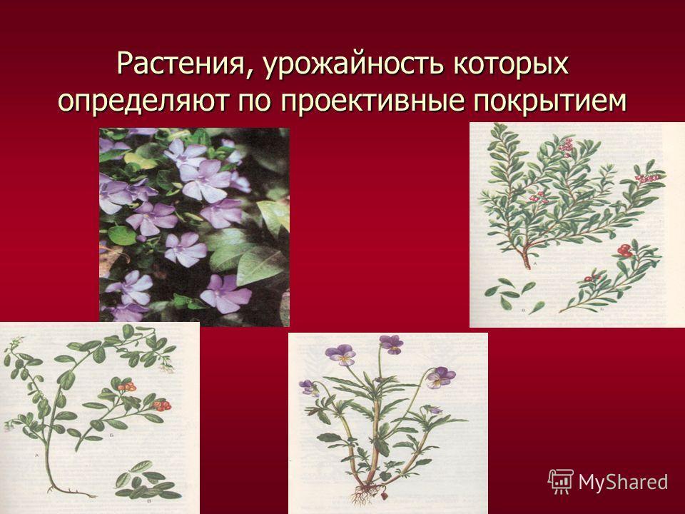 Растения, урожайность которых определяют по проективные покрытием