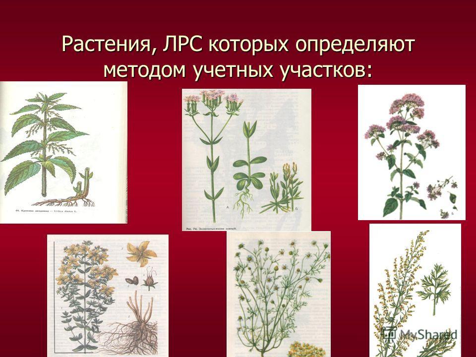 Растения, ЛРС которых определяют методом учетных участков: