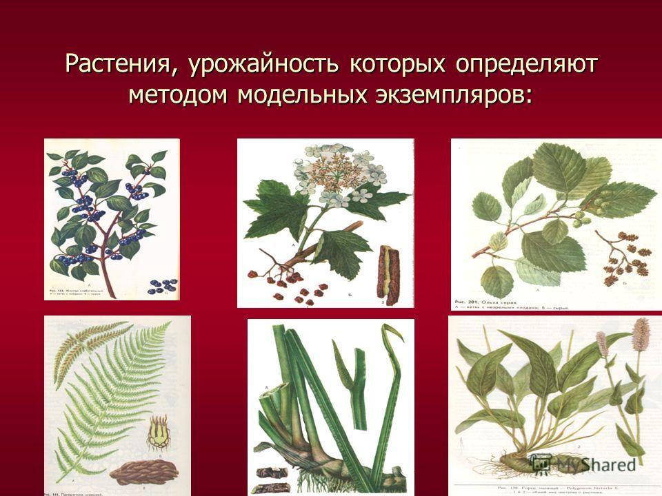Растения, урожайность которых определяют методом модельных экземпляров: