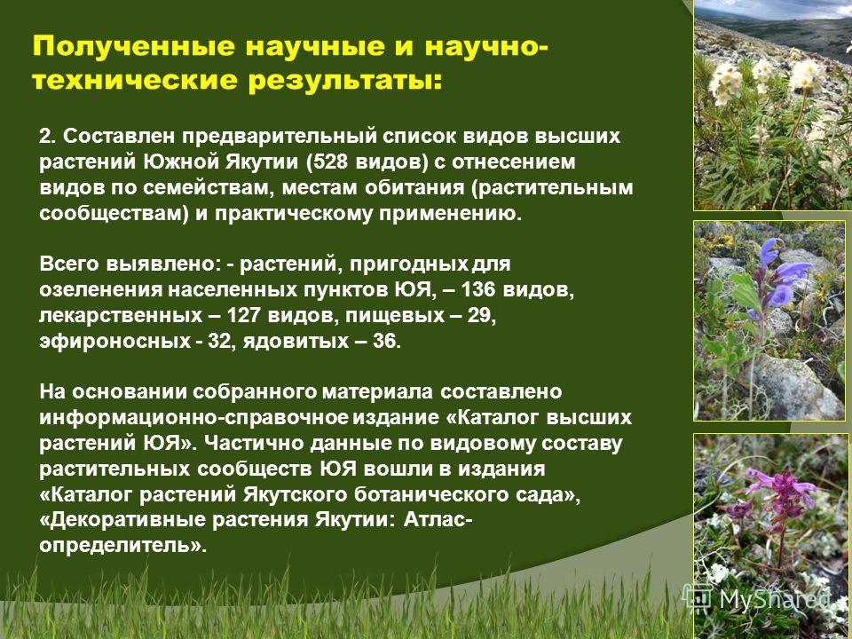 Полученные научные и научно- технические результаты: 2. Составлен предварительный список видов высших растений Южной Якутии (528 видов) с отнесением видов по семействам, местам обитания (растительным сообществам) и практическому применению. Всего выя