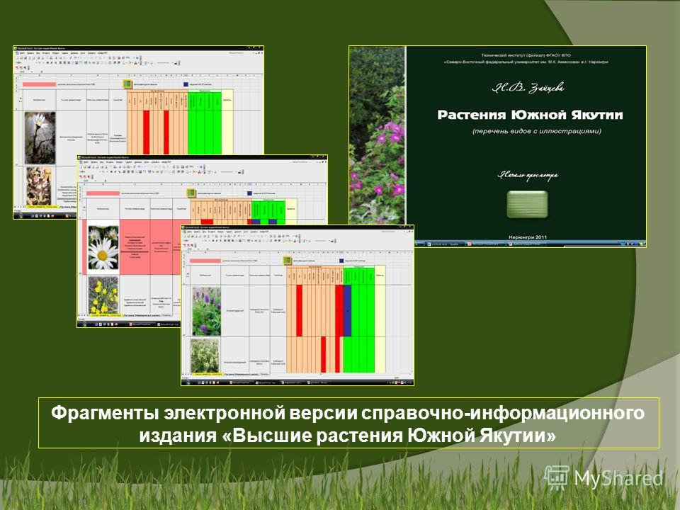 Фрагменты электронной версии справочно-информационного издания «Высшие растения Южной Якутии»