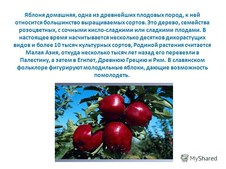 Яблоня домашняя, одна из древнейших плодовых пород, к ней относится большинство выращиваемых сортов. Это дерево, семейства розоцветных, с сочными кисло-сладкими или сладкими плодами. В настоящее время насчитывается несколько десятков дикорастущих вид