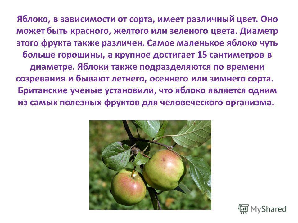 Яблоко, в зависимости от сорта, имеет различный цвет. Оно может быть красного, желтого или зеленого цвета. Диаметр этого фрукта также различен. Самое маленькое яблоко чуть больше горошины, а крупное достигает 15 сантиметров в диаметре. Яблоки также п