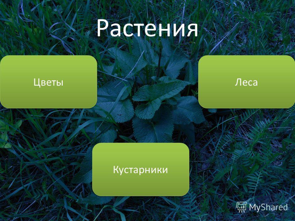 Растения Цветы Леса Кустарники