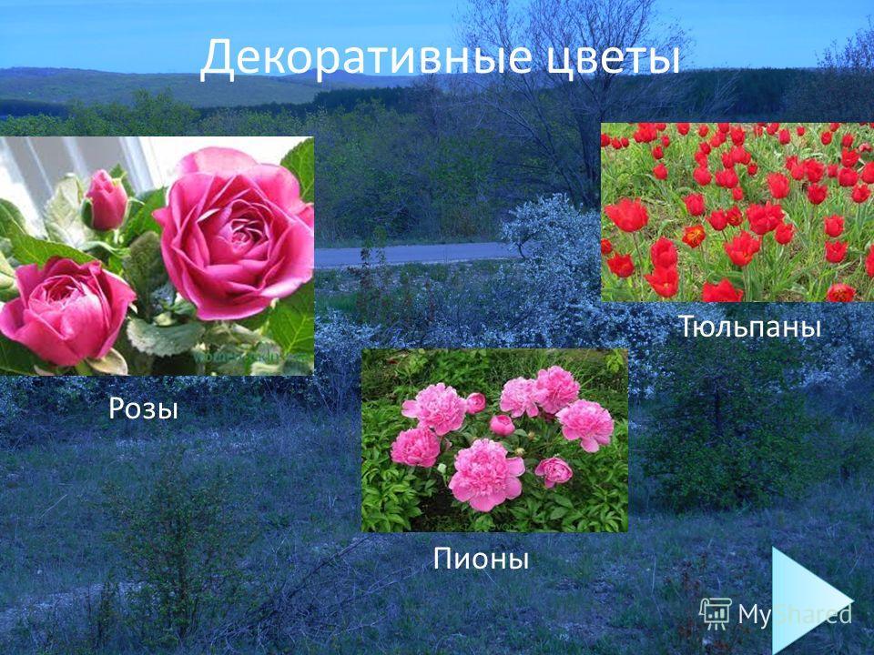Декоративные цветы Розы Пионы Тюльпаны
