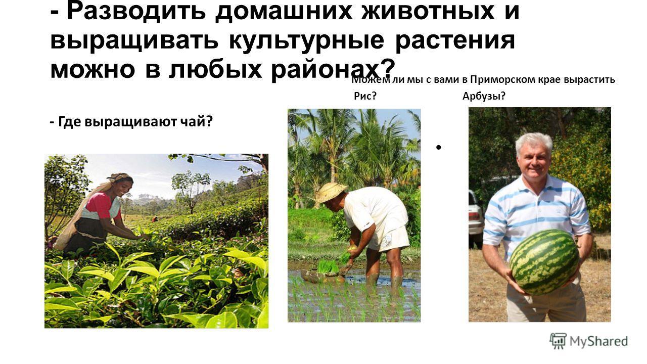 - Разводить домашних животных и выращивать культурные растения можно в любых районах? - Где выращивают чай? Можем ли мы с вами в Приморском крае вырастить Рис? Арбузы?