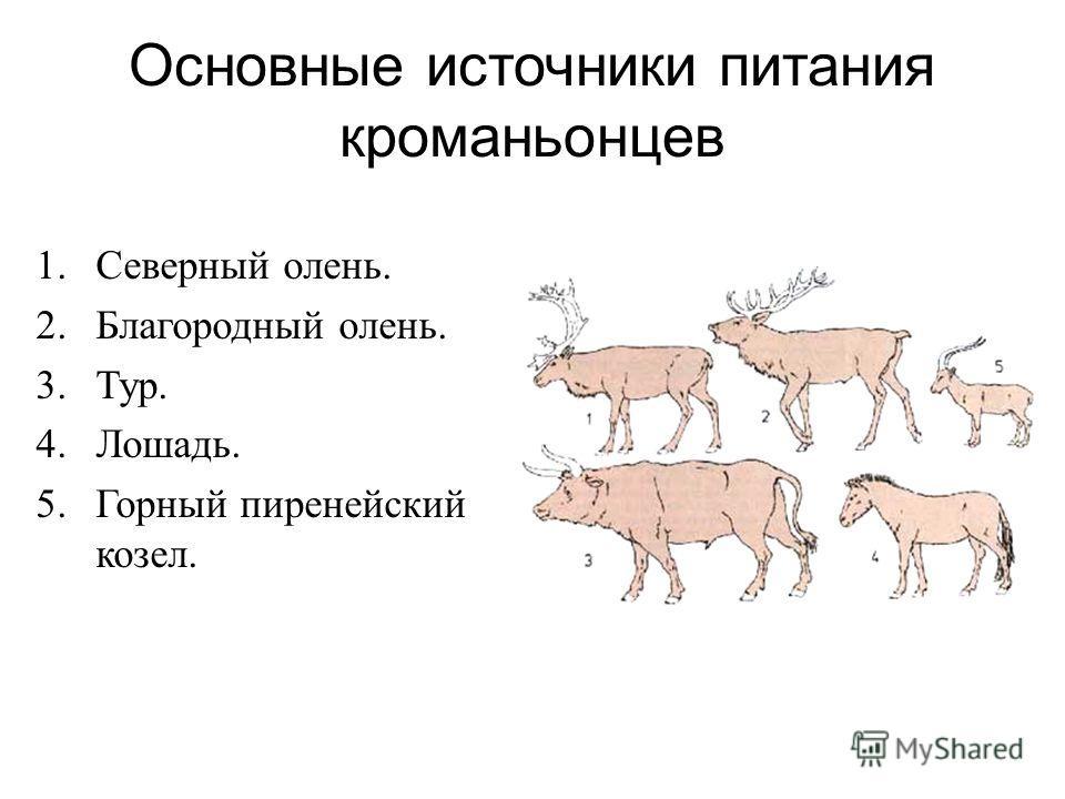 Основные источники питания кроманьонцев 1. Северный олень. 2. Благородный олень. 3.Тур. 4.Лошадь. 5. Горный пиренейский козел.