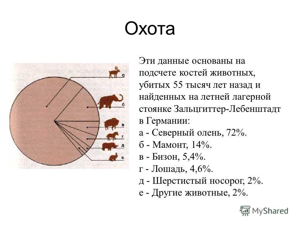 Охота Эти данные основаны на подсчете костей животных, убитых 55 тысяч лет назад и найденных на летней лагерной стоянке Зальцгиттер-Лебенштадт в Германии: а - Северный олень, 72%. б - Мамонт, 14%. в - Бизон, 5,4%. г - Лошадь, 4,6%. д - Шерстистый нос