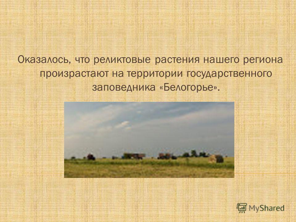 Оказалось, что реликтовые растения нашего региона произрастают на территории государственного заповедника «Белогорье».
