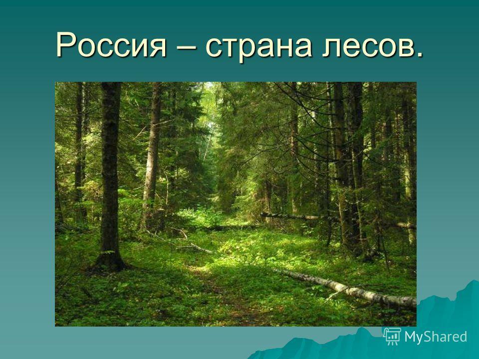 Россия – страна лесов.