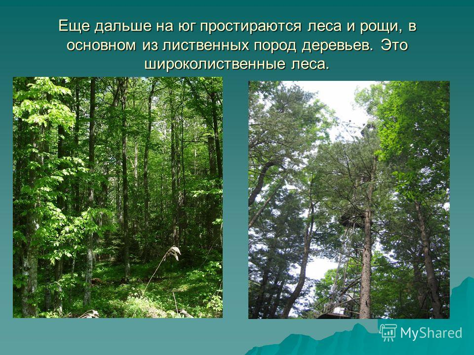Еще дальше на юг простираются леса и рощи, в основном из лиственных пород деревьев. Это широколиственные леса.