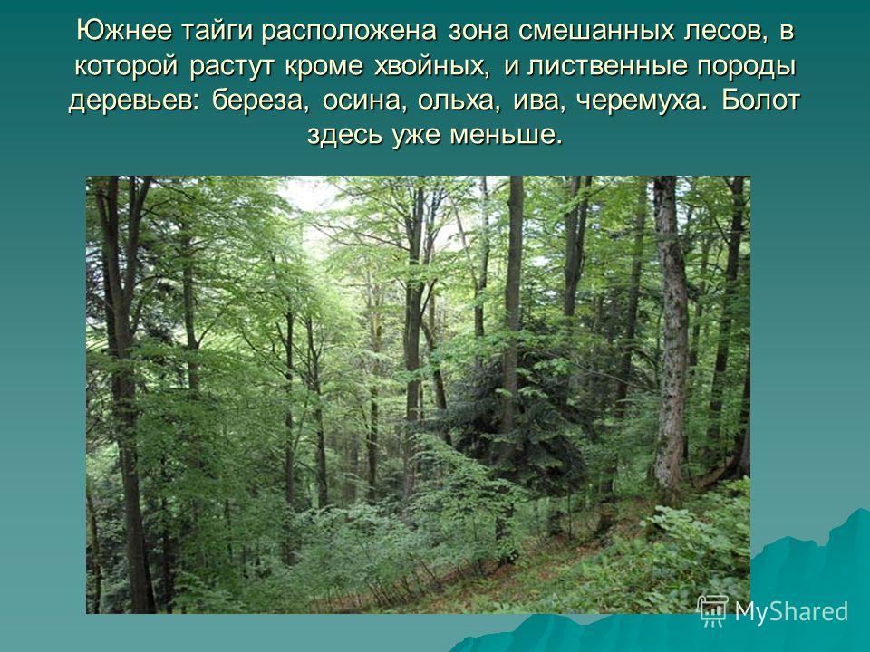 Южнее тайги расположена зона смешанных лесов, в которой растут кроме хвойных, и лиственные породы деревьев: береза, осина, ольха, ива, черемуха. Болот здесь уже меньше.