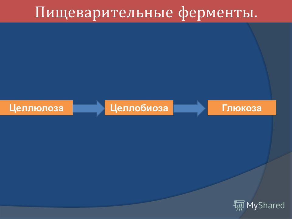 Пищеварительные ферменты. Целлюлоза Целлобиоза Глюкоза