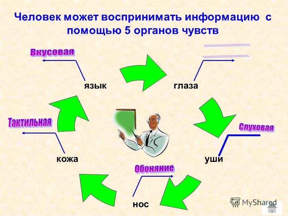 Человек может воспринимать информацию с помощью 5 органов чувств