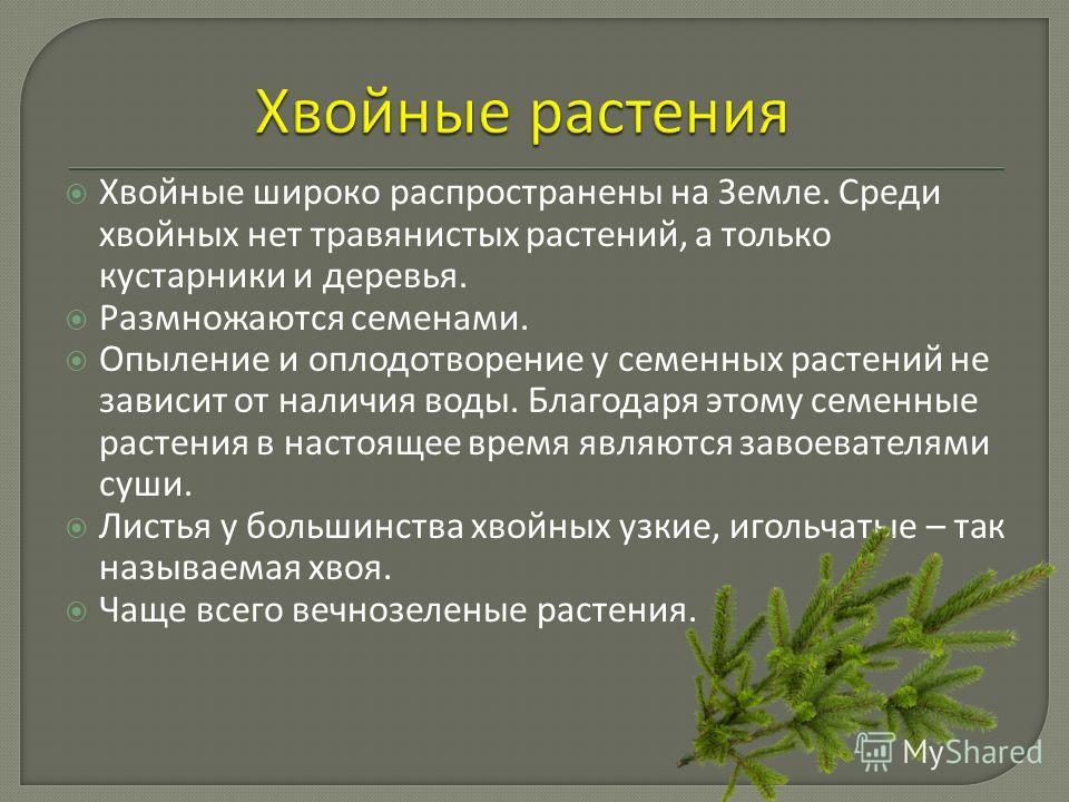 Хвойные широко распространены на Земле. Среди хвойных нет травянистых растений, а только кустарники и деревья. Размножаются семенами. Опыление и оплодотворение у семенных растений не зависит от наличия воды. Благодаря этому семенные растения в настоя