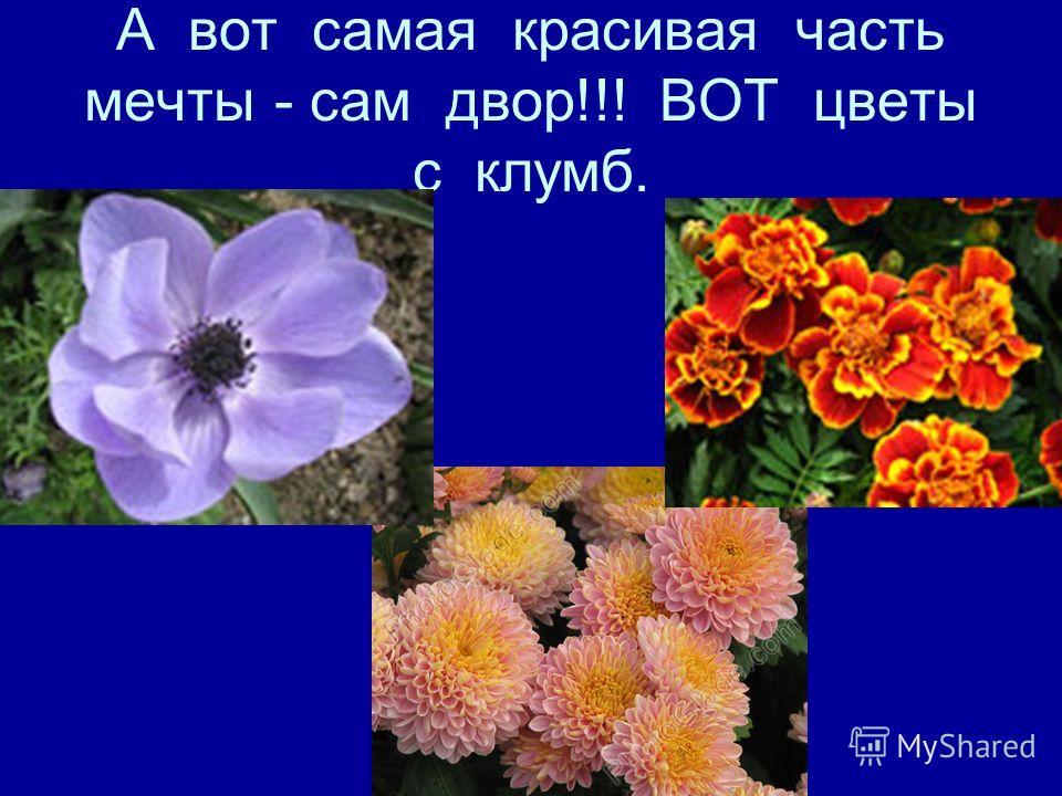 А вот самая красивая часть мечты - сам двор!!! ВОТ цветы с клумб.