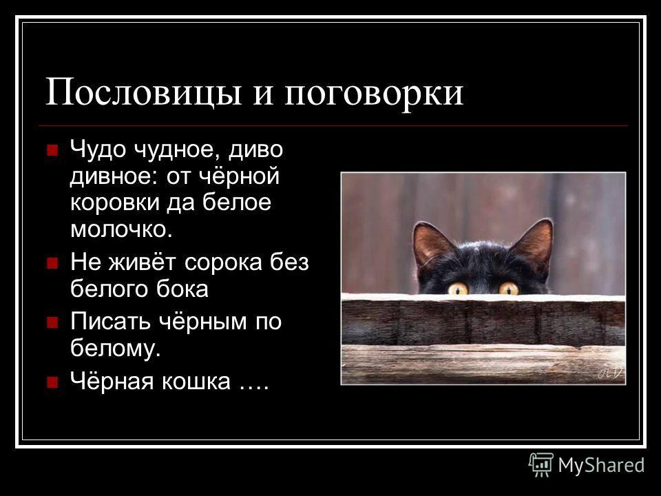 Пословицы и поговорки Чудо чудное, диво дивное: от чёрной коровки да белое молочко. Не живёт сорока без белого бока Писать чёрным по белому. Чёрная кошка ….