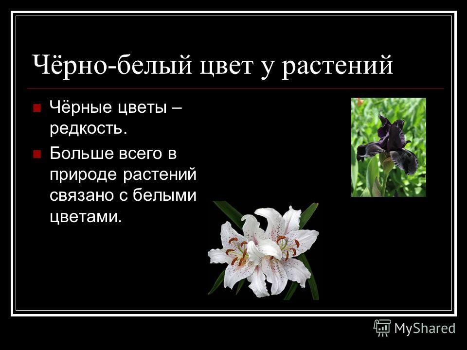 Чёрно-белый цвет у растений Чёрные цветы – редкость. Больше всего в природе растений связано с белыми цветами.