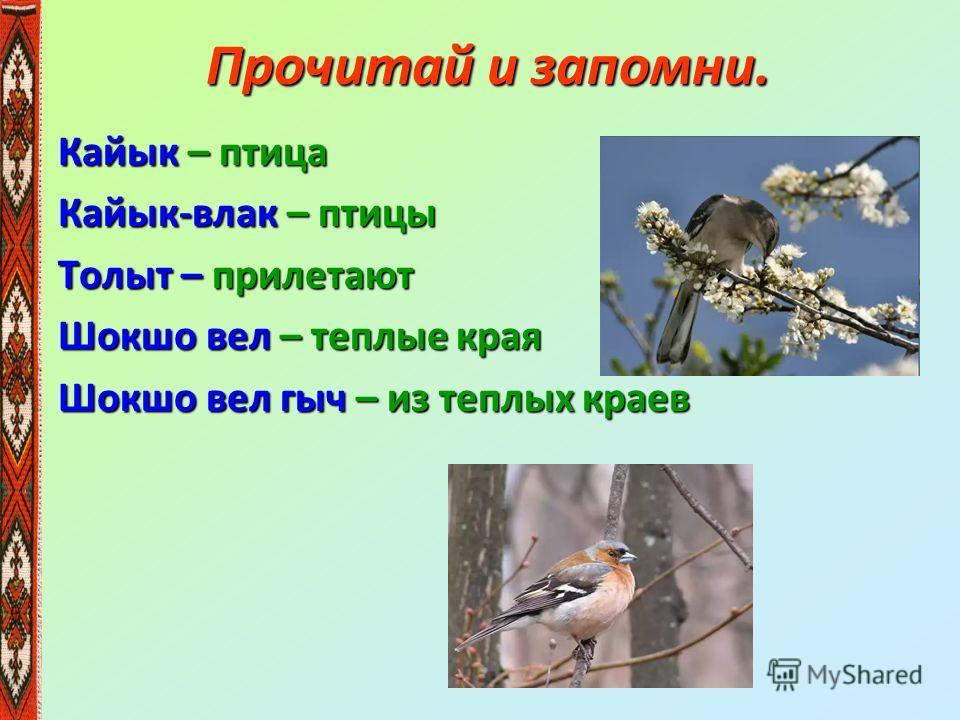 Прочитай и запомни. Кайык – птица Кайык-влак – птицы Толыт – прилетают Шокшо вел – теплые края Шокшо вел гыч – из теплых краев