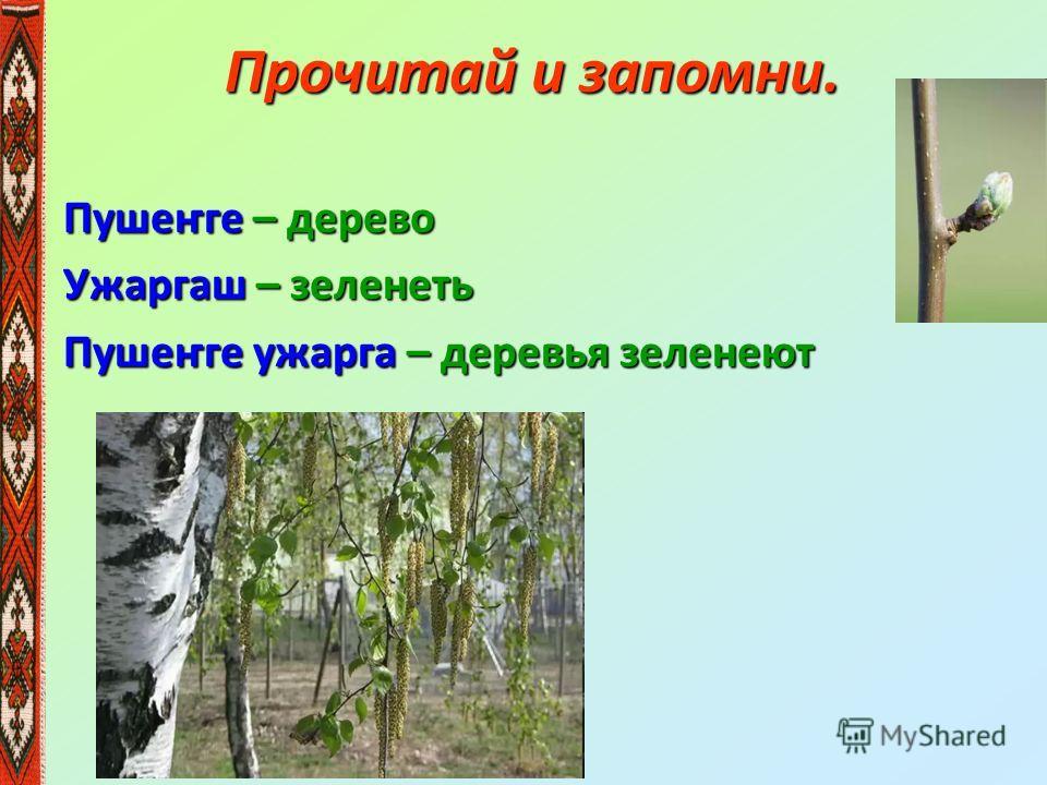 Прочитай и запомни. Пушеҥге – дерево Ужаргаш – зеленеть Пушеҥге ужарга – деревья зеленеют