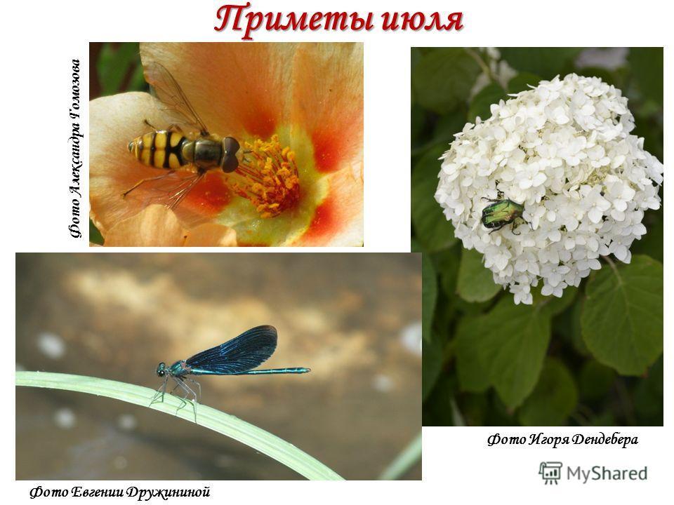 Приметы июля Фото Игоря Дендебера Фото Евгении Дружининой Фото Александра Гомозова