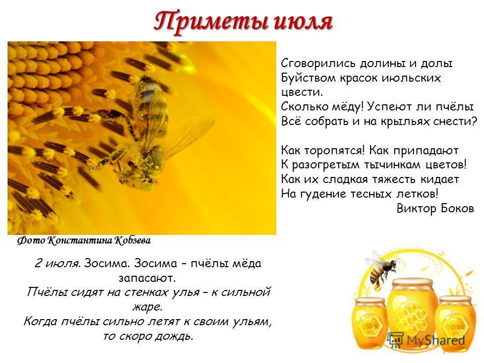 Приметы июля 2 июля. Зосима. Зосима – пчёлы мёда запасают. Пчёлы сидят на стенках улья – к сильной жаре. Когда пчёлы сильно летят к своим ульям, то скоро дождь. Фото Константина Кобзева Сговорились долины и долы Буйством красок июльских цвести. Сколь