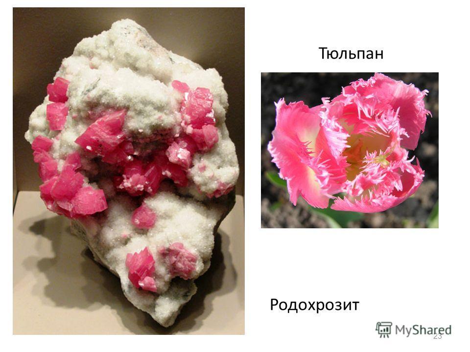 23 Родохрозит Тюльпан