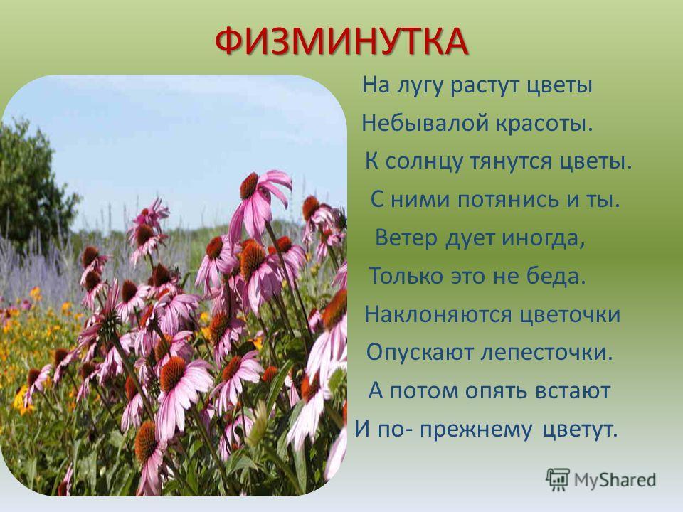 ФИЗМИНУТКА На лугу растут цветы Небывалой красоты. К солнцу тянутся цветы. С ними потянись и ты. Ветер дует иногда, Только это не беда. Наклоняются цветочки Опускают лепесточки. А потом опять встают И по- прежнему цветут.