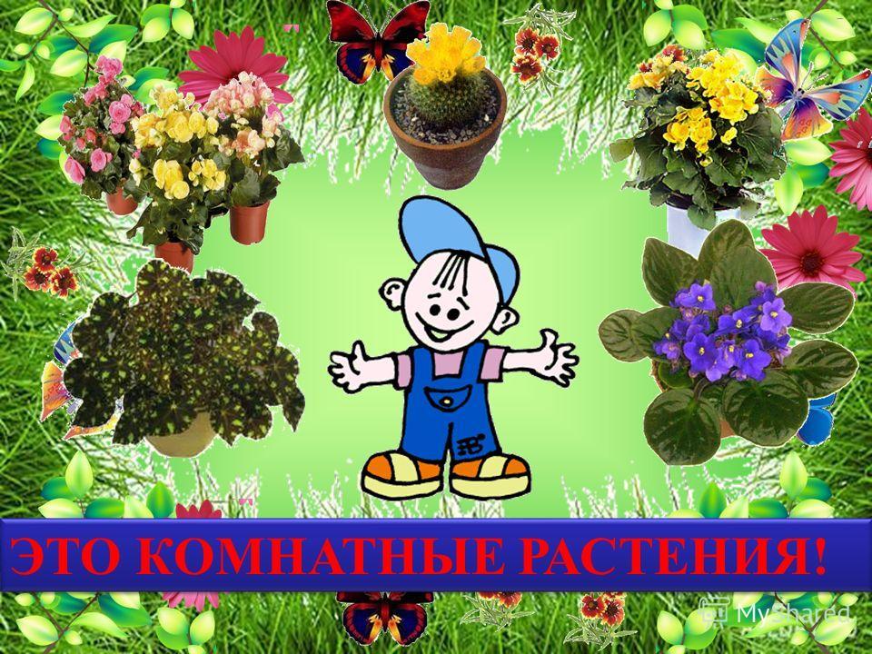 Очищают воздух, Создают уют, На окнах зеленеют И круглый год цветут!