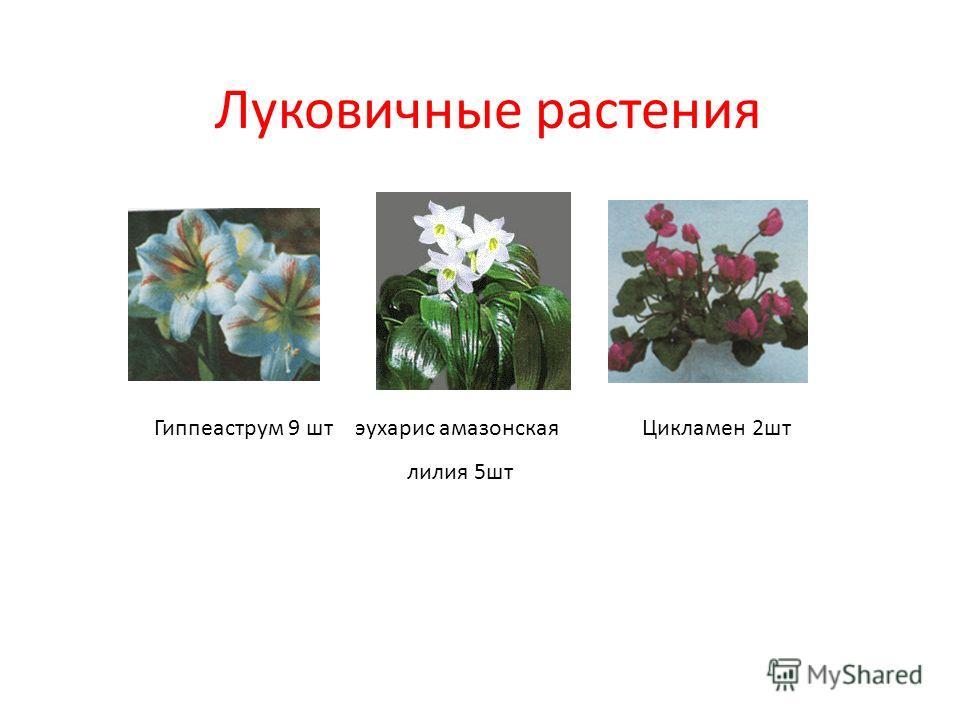 Луковичные растения Гиппеаструм 9 шт эухарис амазонская лилия 5 шт Цикламен 2 шт
