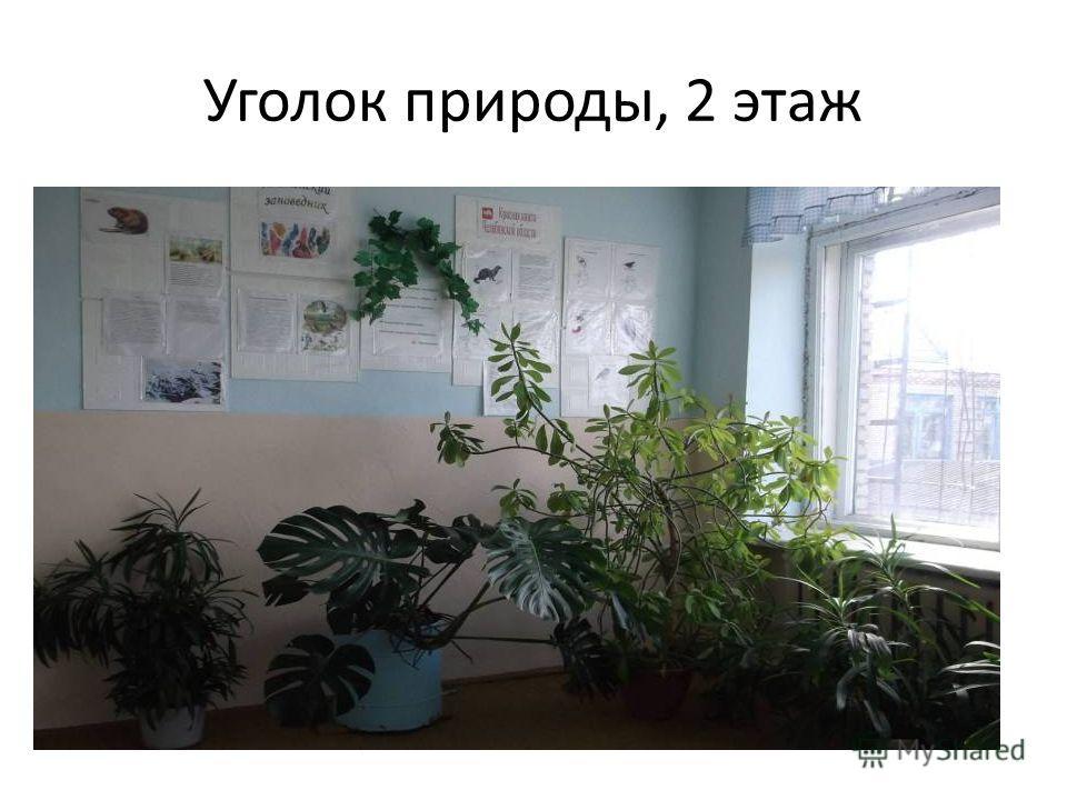 Уголок природы, 2 этаж