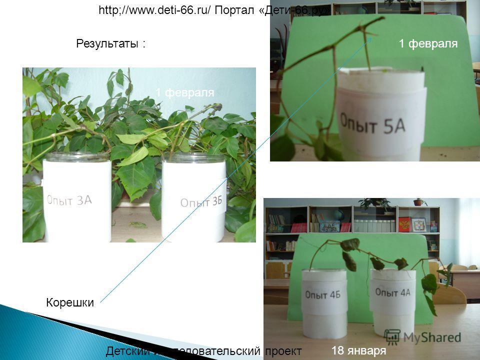 Детский исследовательский проект http;//www.deti-66.ru/ Портал «Дети-66.ру» 18 января 1 февраля Результаты : Корешки