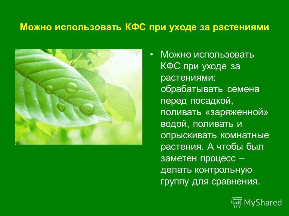Можно использовать КФС при уходе за растениями Можно использовать КФС при уходе за растениями: обрабатывать семена перед посадкой, поливать «заряженной» водой, поливать и опрыскивать комнатные растения. А чтобы был заметен процесс – делать контрольну