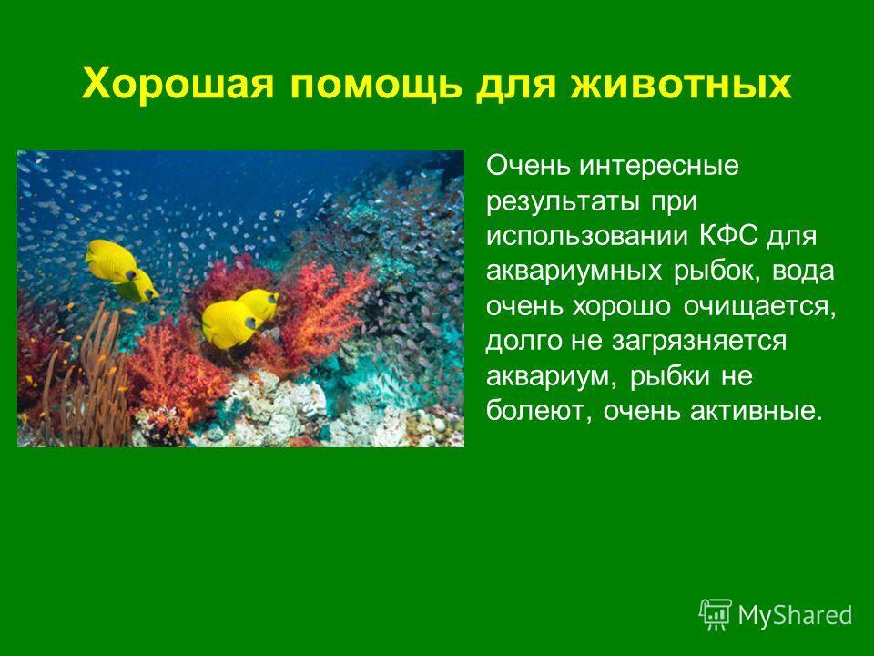 Хорошая помощь для животных Очень интересные результаты при использовании КФС для аквариумных рыбок, вода очень хорошо очищается, долго не загрязняется аквариум, рыбки не болеют, очень активные.