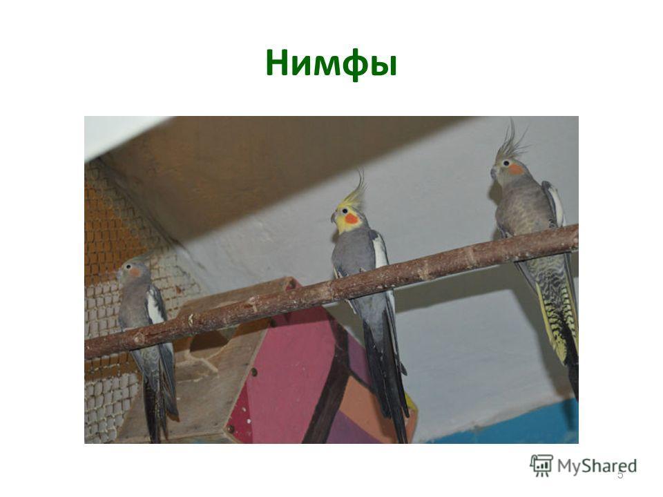 Легко переносят неволю и живут в клетке по нескольку десятков лет. Всего известно более 300 видов попугаев. Попугаи общаются резкими, громкими криками или нежным щебетанием. Могут научиться подражать человеческой речи, повторяя отдельные слова и даже