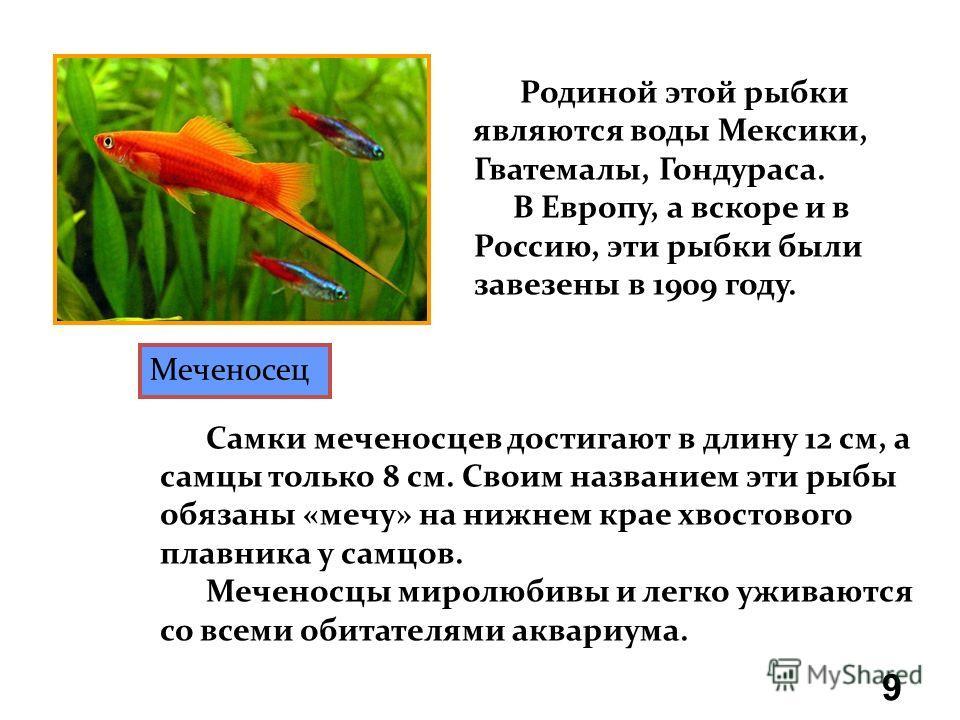 Аквариумные рыбки Меченосец Гуппи Сомик Макропод 8 Гурами мраморная