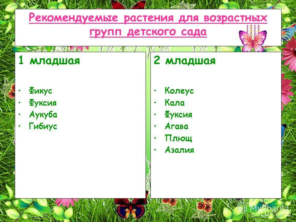 Рекомендуемые растения для возрастных групп детского сада 1 младшая Фикус Фуксия Аукуба Гибиус 2 младшая Колеус Кала Фуксия Агава Плющ Азалия