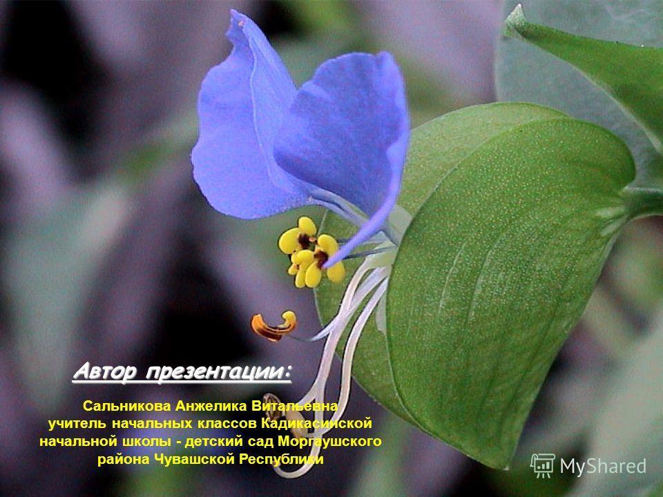 Кроссворд «Комнатные растения» 1 2 3 4 5 ы 6 а 1. «Зеленый паучок» растение с длинными свешивающимися усами, на которых вырастают растеньица-детки. хлорофитум к 2.Растение, которое имеет прозвище «Ванька-мокрый». бальзамин 3. Растение со свисающими в