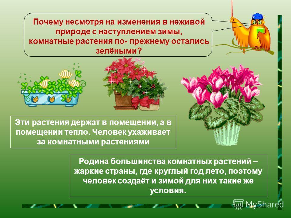 А что происходит с комнатными растениями в разное время года ? У комнатных растений листья осенью не опадают и всю зиму остаются зелёными