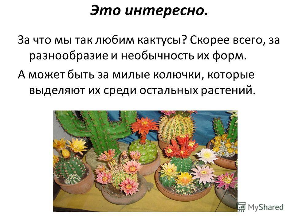 Это интересно. За что мы так любим кактусы? Скорее всего, за разнообразие и необычность их форм. А может быть за милые колючки, которые выделяют их среди остальных растений.