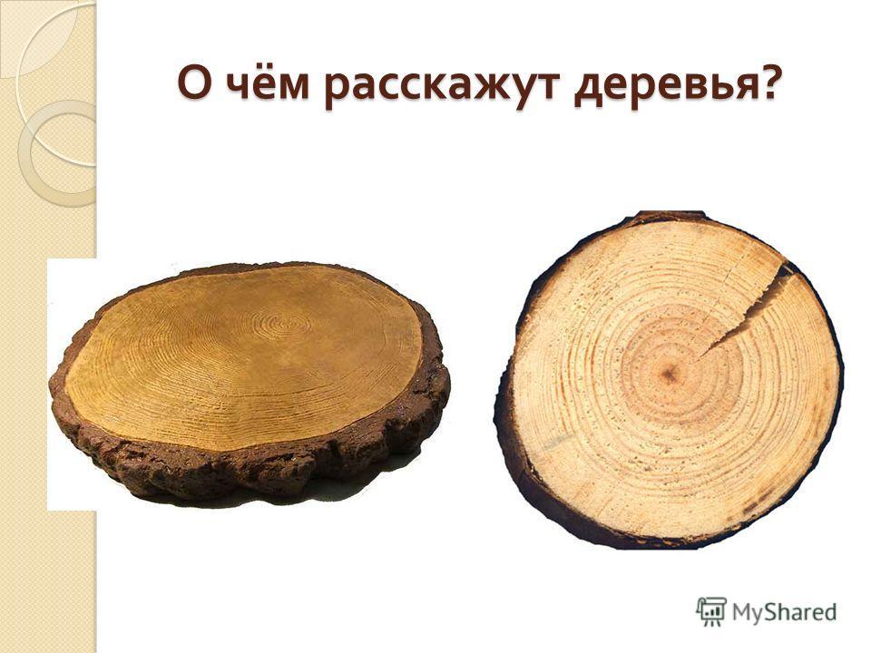 О чём расскажут деревья ?