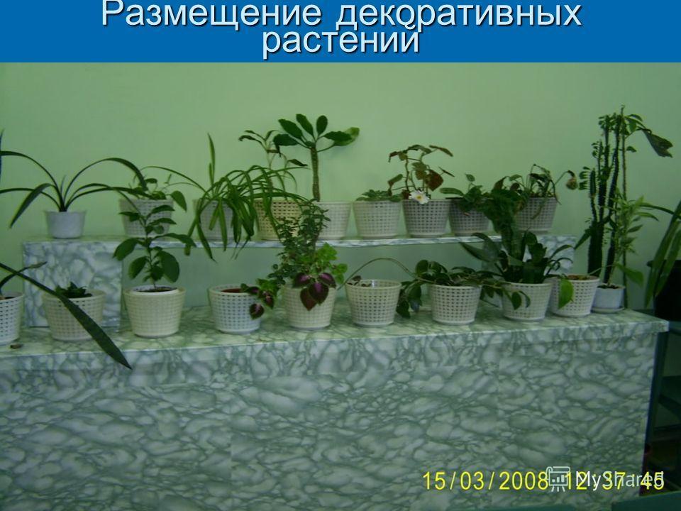 Размещение декоративных растений