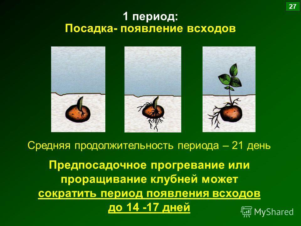1 период: Посадка- появление всходов Средняя продолжительность периода – 21 день Предпосадочное прогревание или проращивание клубней может сократить период появления всходов до 14 -17 дней 27