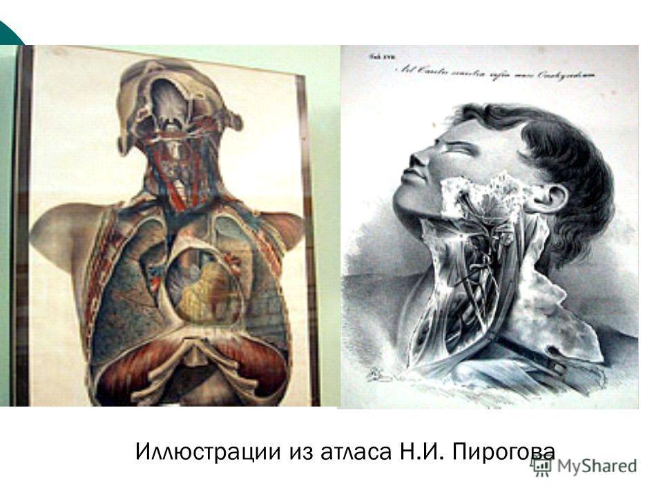 Иллюстрации из атласа Н.И. Пирогова