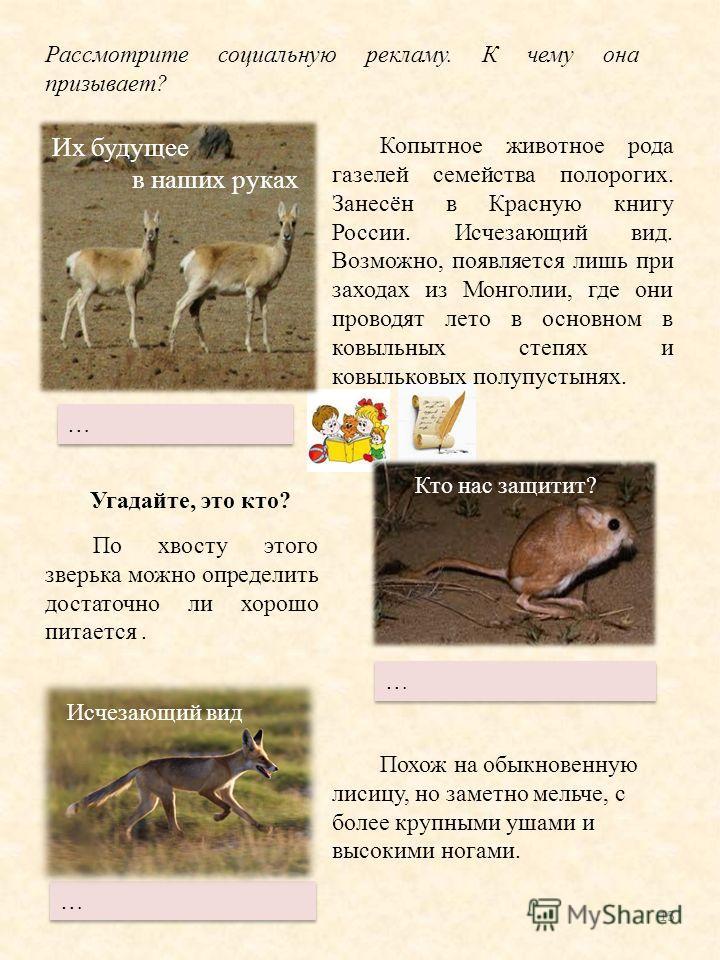 15 Копытное животное рода газелей семейства полорогих. Занесён в Красную книгу России. Исчезающий вид. Возможно, появляется лишь при заходах из Монголии, где они проводет лето в основном в ковыльных степях и ковыльковых полупустынях. По хвосту этого