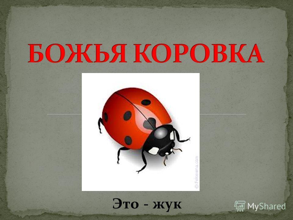 Это - жук