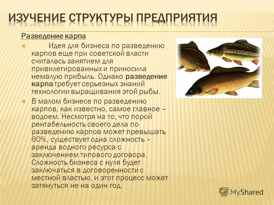Разведение карпа Идея для бизнеса по разведению карпов еще при советской власти считалась занятием для привилегированных и приносила немалую прибыль. Однако разведение карпа требует серьезных знаний технологии выращивания этой рыбы. В малом бизнесе п