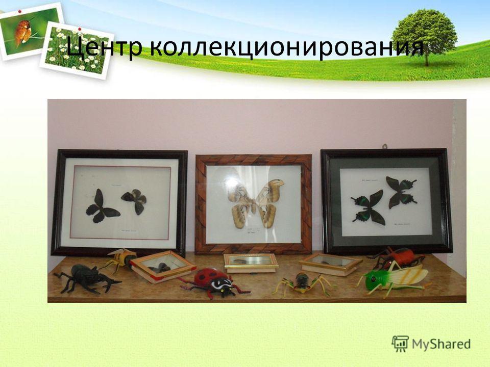 Центр коллекционирования