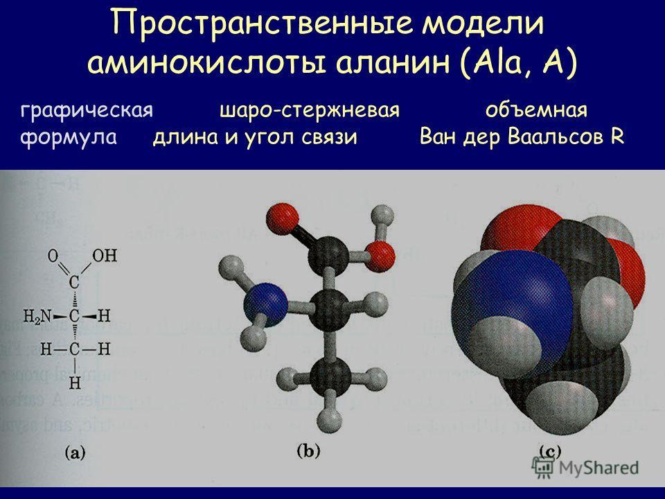Пространственные модели аминокислоты аланин (Ala, А) графическаяшаро-стержневая объемная формула длина и угол связи Ван дер Ваальсов R